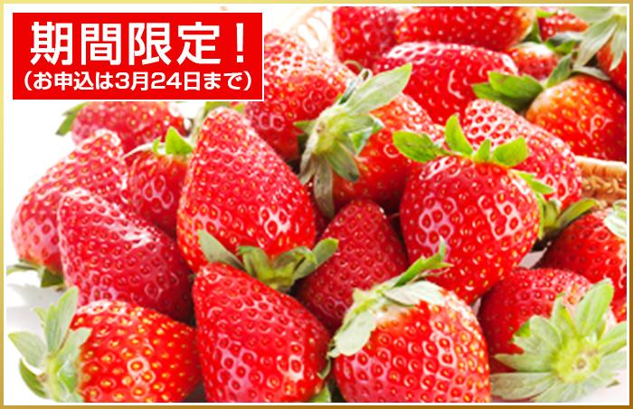 あまおう(贈答向け・約270g×2) 青果市場厳選 福岡特産